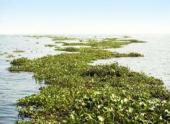 В Атлантическом океане обнаружены «мертвые зоны»
