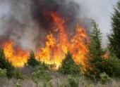 За сутки в России потушено 200 лесных пожаров