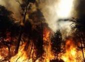 За сутки в лесах России ликвидировано 55 пожаров