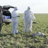 Казахстанские экологи потребовали проверить Минсельхоз страны в связи с массовой гибелью сайгаков