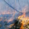 Площадь лесных пожаров в Бурятии сократилась почти в 10 раз