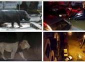 Наводнение в Тбилиси: 10 погибших, на улицах отстреливают бежавших из зоопарка животных