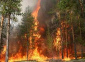 За день в России потушено 67 лесных пожаров