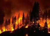 Обнаружены следы пожара возрастом 66 миллионов лет