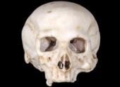 Череп, возможно, созданный да Винчи, разделил ученых на два лагеря