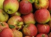 Яблоки снижают риск инфаркта