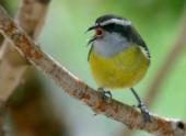 Ученые решили расшифровать пение птиц