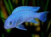 Миф о короткой памяти рыб опровергнут канадскими учеными