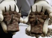 1500-летние когти, найденные в Перу, заинтриговали археологов