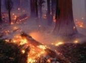 Площадь лесных пожаров в Якутии за сутки увеличилась вдвое