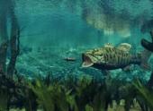 Интерсексуальные рыбы обнаружены в Пенсильвании