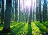 Apple совместно с Всемирным фондом дикой природы будет выращивать устойчивые леса в Китае