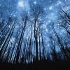 На Новосибирск обрушились звездные дожди