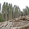 Дикая перспектива диких лесов