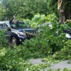 Ботанический и Таврический сады закрыли из-за урагана