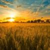 Ученые рассказали, как побороть голод на всей планете
