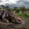 СМИ: британская полиция массово проверяет зоопарки после убийства носорога под Парижем