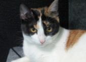 Госдума намерена ограничить допустимое число кошек и собак в квартире