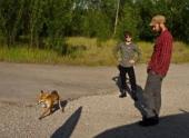 В зоне ЧАЭС телевизионщики зафиксировали больше животных, чем в прошлом году