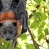 Ночь летучих мышей отметят в Липецкой области
