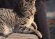 Самого маленького дикого кота Южной Америки спасли от вымирания