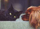 «Люди начнут избавляться от своих питомцев» — депутат Госдумы о законопроекте о регистрации домашних животных