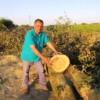 Вдоль Дона вырубают деревья