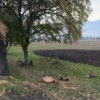 Еще раз о незаконной вырубке деревьев: на этот раз по решению властей
