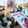 В России приняли первый в истории закон об обращении с животными. Запретили контактные зоопарки и усыпление животных