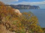 Суд обязал вернуть лес, отданный правительством Севастополя в частные руки