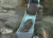 Выдры спасались от жары и катались на водяных горках в японском зоопарке