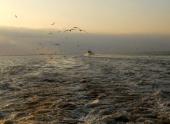 На дне Мексиканского залива образовалась «мертвая зона»