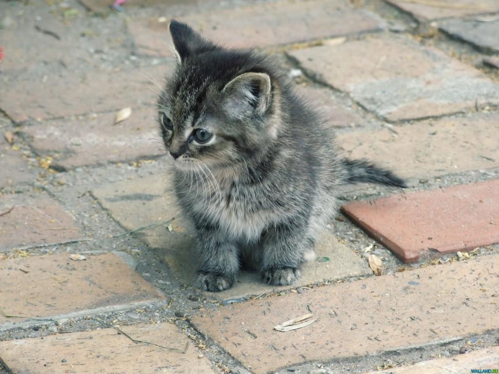 В апреле в Витебске планируют открыть первый приют для бездомных животных