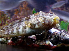 Таблицы видов рыб