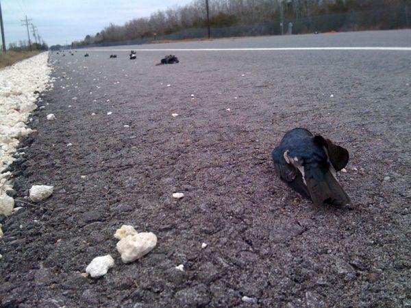 Сотни мертвых птиц обнаружены в Штате Луизиана США. Фото: www.kplctv.com