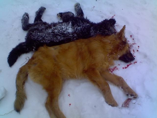 Акция  по уничтожению бездомных собак  на Киевском вокзале г. МосквыФото: zaks.ru