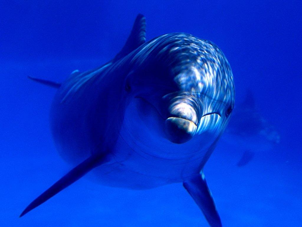 Дельфин. Фото: intelligent.lv