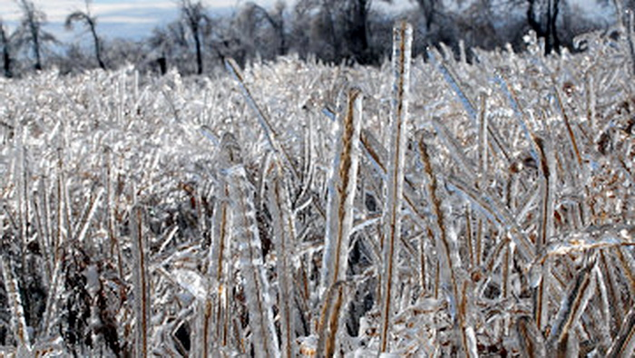 Аномальные морозы в Казахстане. Фото : © Владислав ВОДНЕВ