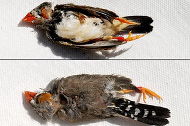 Массовая гибели птиц в Нью-Йорке. Фото: Фото: NY Daily News