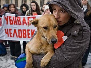Убийство бездомных собак в Киеве не пройдёт безнаказанно