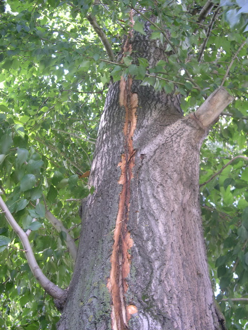 молния ударила в дерево фото