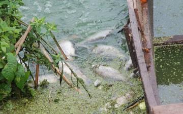 В Масловском затоне произошла массовая гибель рыбы