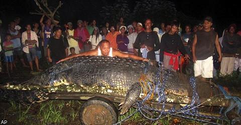 Жители деревни Агусан на Филиппинах поймали гигантского крокодила-людоеда