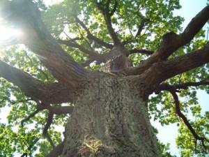 ...прошлом году предоставил незаконное распоряжение на вырубку более 80 деревьев.