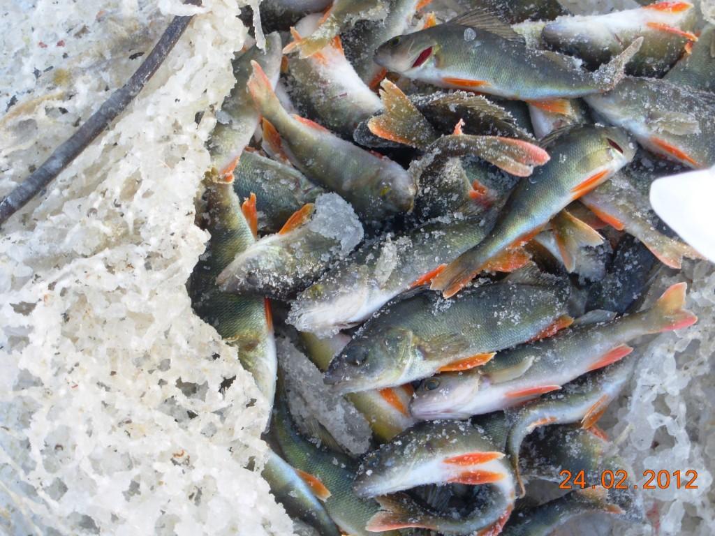 ловим рыбку в пруду