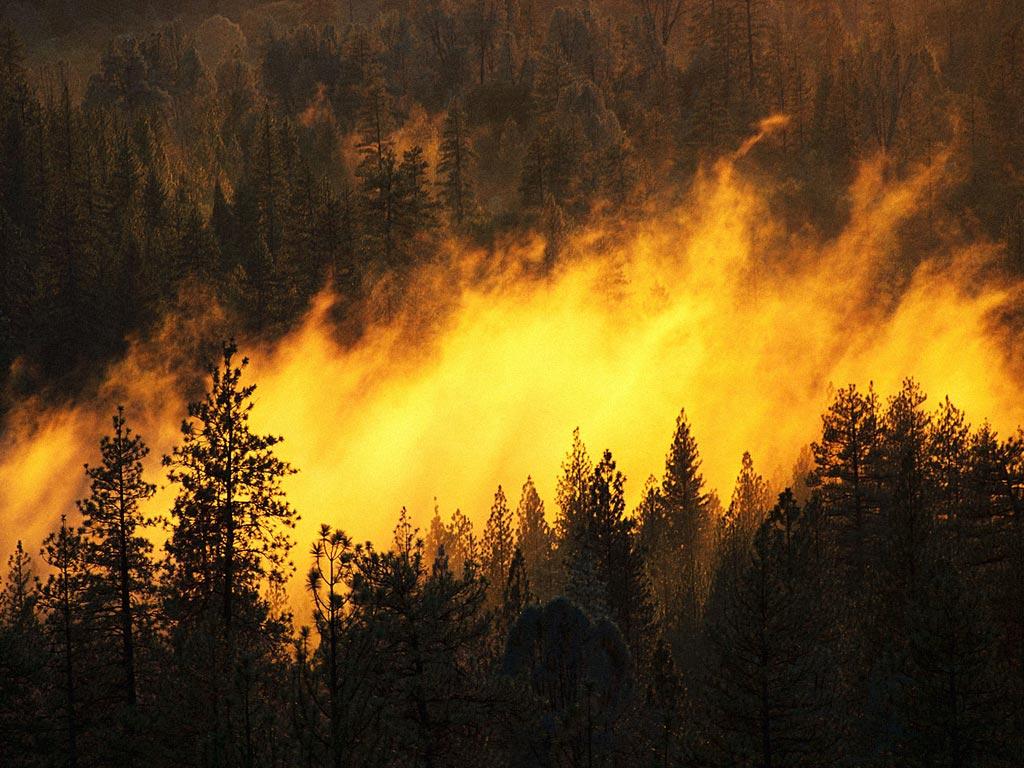 Лесные пожары бушуют в пяти из девяти регионов Дальнего Востока