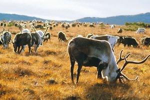 Животный мир Ямала